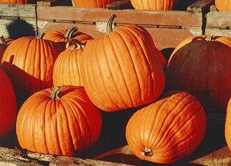 Mark Bachelor, from Pick Your Own Pumpkins, on National Pumpkin Day