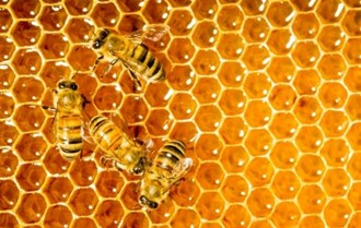 Tim Lovett, Spokesman Director of the British beekeepers association, about National Honey Week