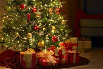 Christmas tree expert David Mitchell gives the lowdown on the best trees to choose