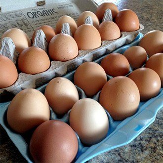 Pancake day has been and gone, but the British freerange egg industry has narrowly avoided being splattered