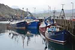 NEF: Will Brexit boost Britain's fishing industry?